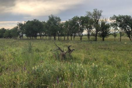 Новости: Вкоммунальную собственность Алматы вернули более 383гектаровземли