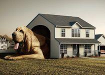 Новости: В ЮКО приняты новые правила содержания домашних животных