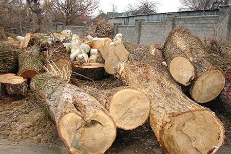Новости: В зоопарке Алматы снесли более 100 деревьев
