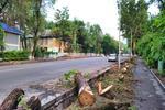Новости: ВАлматы предложили ужесточить наказание завырубку деревьев