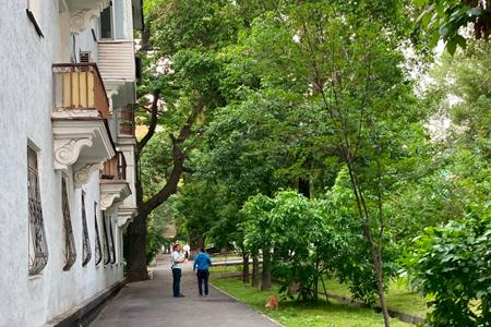 Новости: Названы самые редкие деревья Алматы