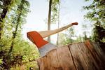 Новости: Как получить разрешение наснос деревьев вАлматы