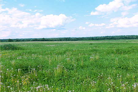 Новости: Утверждён состав комиссии по земельной реформе