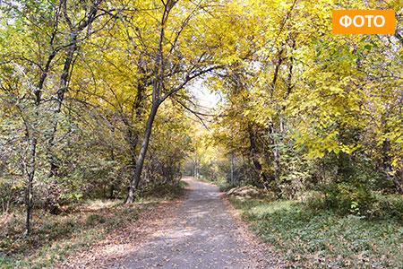 Новости: Осенняя прогулка по роще Баума