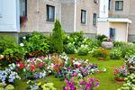 Новости: За самый цветущий двор Алматы наградят