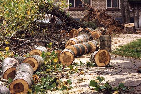 Новости: Полиция Алматы просит следить за деревьями
