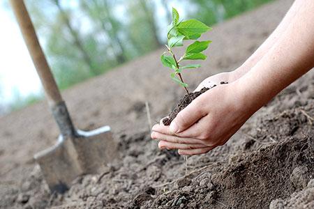 Новости: В Астане одобрили программу «Один миллион деревьев»