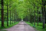 Новости: ВАлматы могут появиться дубовые икленовые улицы