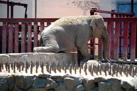 Новости: Алматинский зоопарк может стать лучшим в Евразии