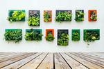 Статьи: Цветы винтерьере: как стильно озеленить квартиру