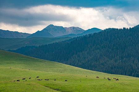 Новости: Что станет платным вИле-Алатауском нацпарке после реализации проекта экотуризма