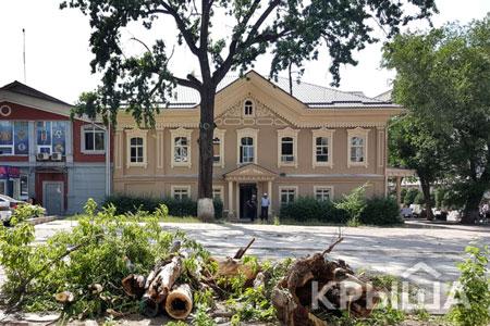 Новости: Акимат Алматы пообещал не вырубать деревья приреконструкцииулиц