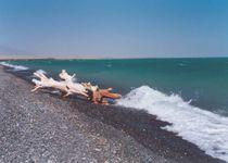 Новости: Участки на побережье Алаколя не спешат осваивать