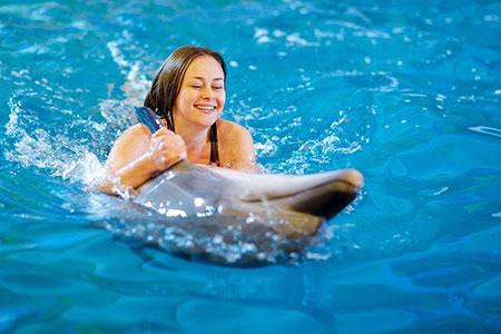 Новости: Строительство дельфинария может начаться осенью