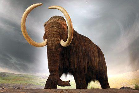 Новости: Карагандинские строители откопали бивни мамонта