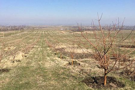Новости: ВРКпредложили открыть доступ кземельному кадастру