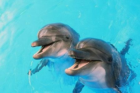Новости: Куда переедет алматинский дельфинарий?