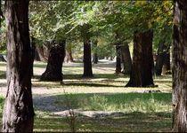 Новости: В Таразе благоустроили парк «Майская роща»