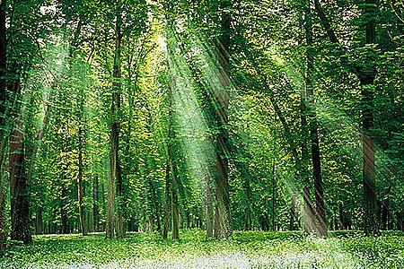 Новости: Как будет выглядеть астанинский лес?