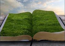 Статьи: Земельные участки и право