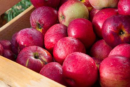 Новости: В районе Бутаковки высадят 6 тысяч яблонь