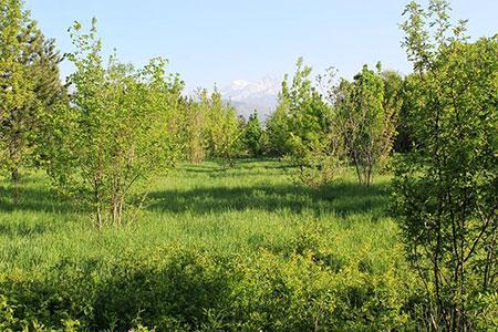 Новости: В Алматы благоустроят парк «Южный»