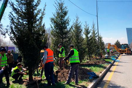 Новости: Алматинцам предложили выбрать места для миллиона деревьев