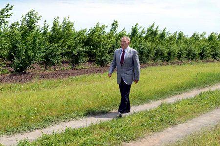 Новости: Зелёный пояс вокруг Астаны предлагают назвать «Елбасы орманы»