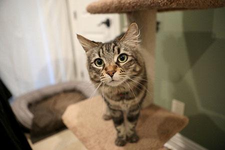 Новости: Американец арендовал жильё для кошек за$1.5тысячи