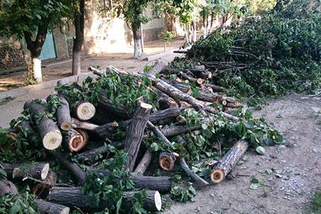Новости: Куда жаловаться на незаконную вырубку деревьев