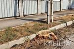 Новости: В Алматы спилят более 750 здоровых деревьев