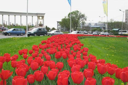 Новости: Втрёх скверах Алматы посадят более тысячи деревьев