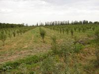 Статьи: Предложено ужесточить требования по использованию земельных ресурсов