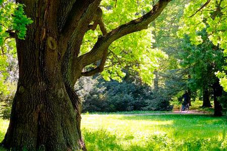 Новости: ВРКпредлагают ввести компенсацию завырубку краснокнижных деревьев