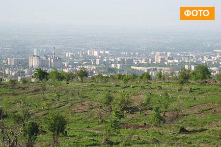 Новости: Топ-7 самых дорогих участков Алматы