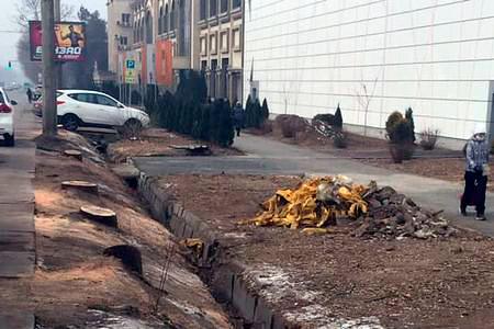 Новости: Президент поручил разобраться снезаконной вырубкой деревьев вАлматы