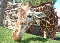 Новости: В столице планируют построить зоопарк