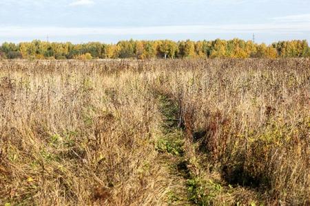 Новости: Сельхозземли РК не будут продавать иностранцам