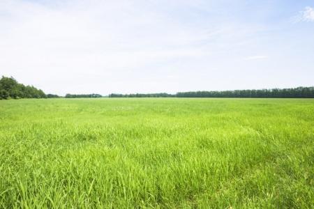 Новости: Где вРКчаще всего дают взятки заполучение земли