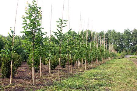 Новости: Более миллиона деревьев высадят в Казахстане