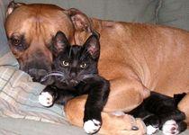 Новости: Маслихат Алматы утвердил новые правила содержания собак и кошек