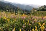 Новости: ВРКпоявится Совет поразвитию национальных парков