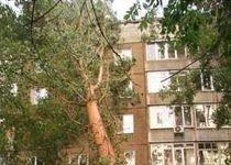 Новости: В Усть-Каменогорске на дом упало дерево (фото)