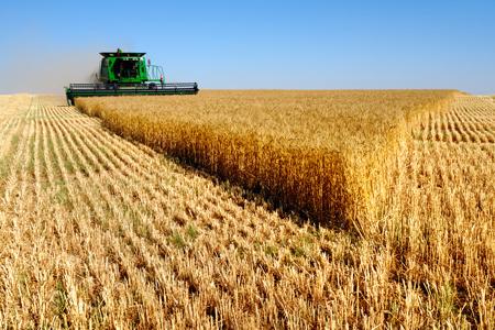 Новости: Земли сельхозназначения оценили в 1.2 трлн тенге