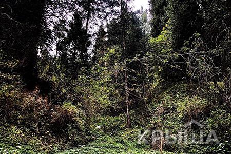 Новости: Часть территории Иле-Алатауского нацпарка вернут вгоссобственность