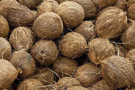 Новости: Благодаря кокосу могут появиться сверхпрочные здания
