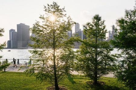 Новости: Искусственные деревья для очистки воздуха создали вСША