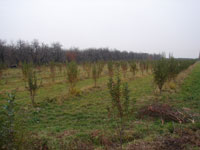 Статьи: Предложено внести изменения и дополнения в Земельный кодекс РК