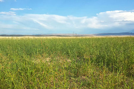 Новости: Более 181 тысячи гектаров земли изымут вАлматинской области