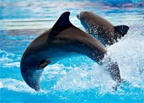 Новости: Дельфинарий на Сайране всё-таки будет